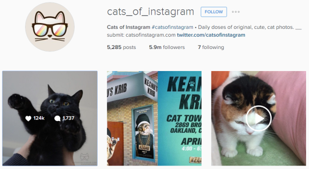 cats-of-instagram